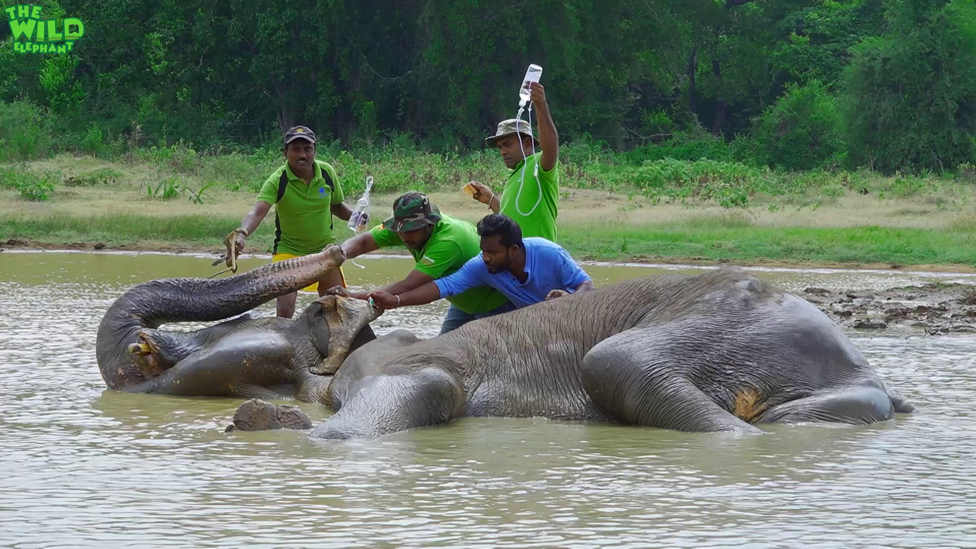 Biggest elephant rescue operation 2018. Part 2 (Elephant shot in the leg) Update