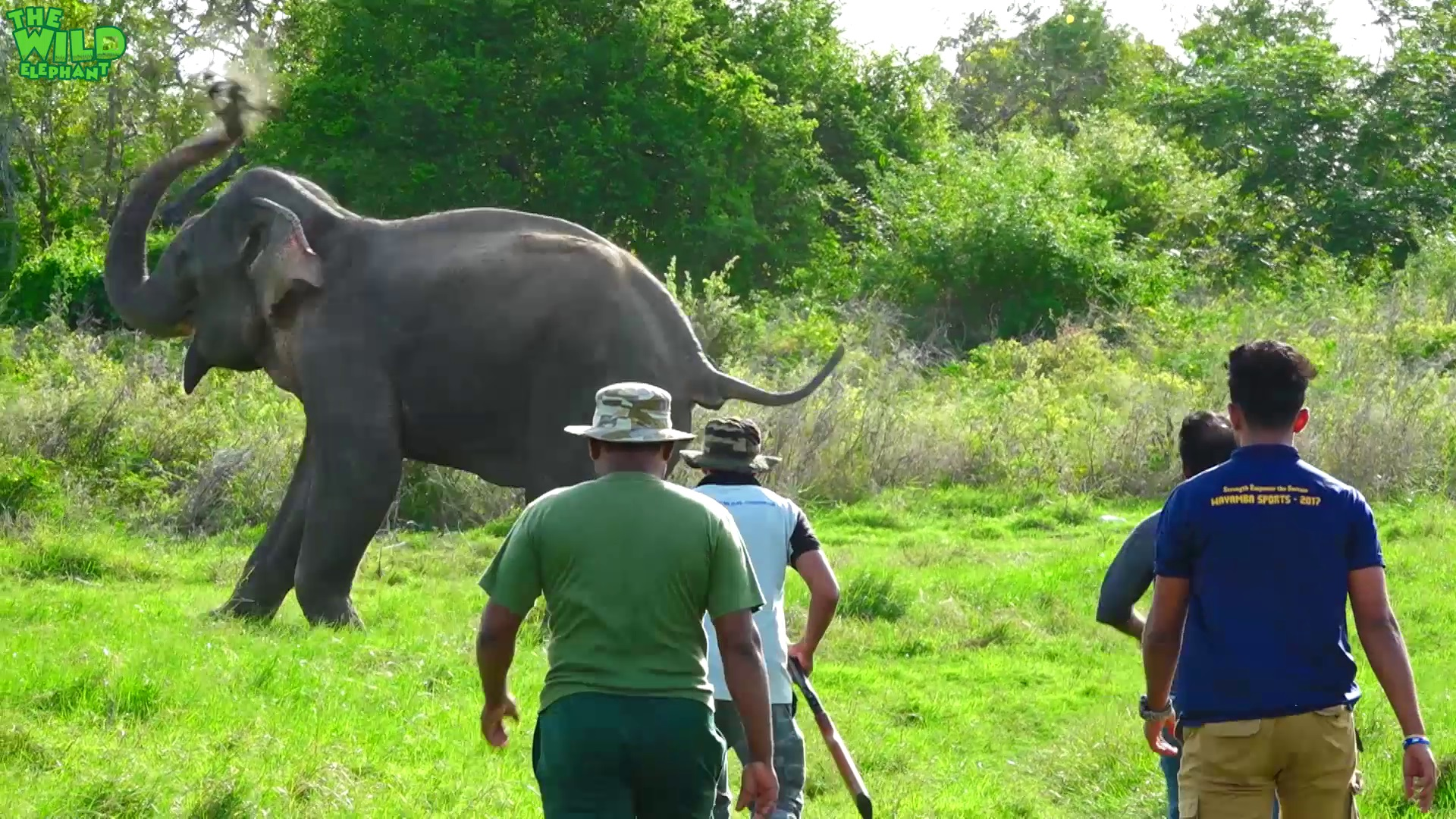 Humanity! Helping an injured Elephant