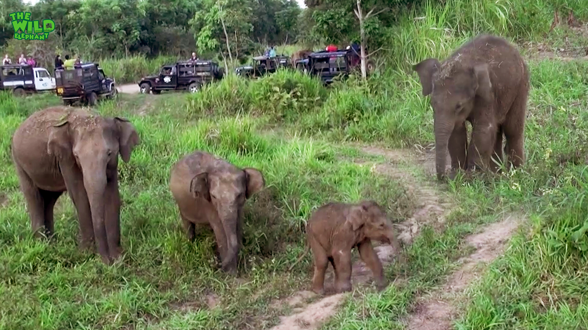 A cute baby elephant is hurt, waiting for medical officers