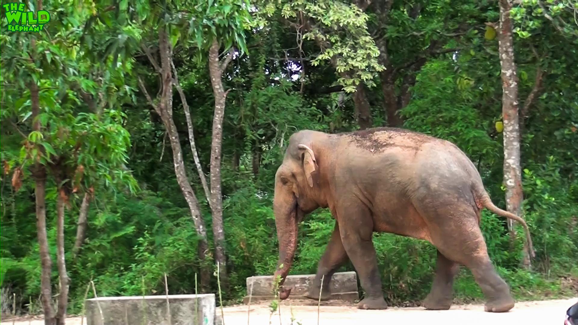 A Monster Elephant Invades a Village