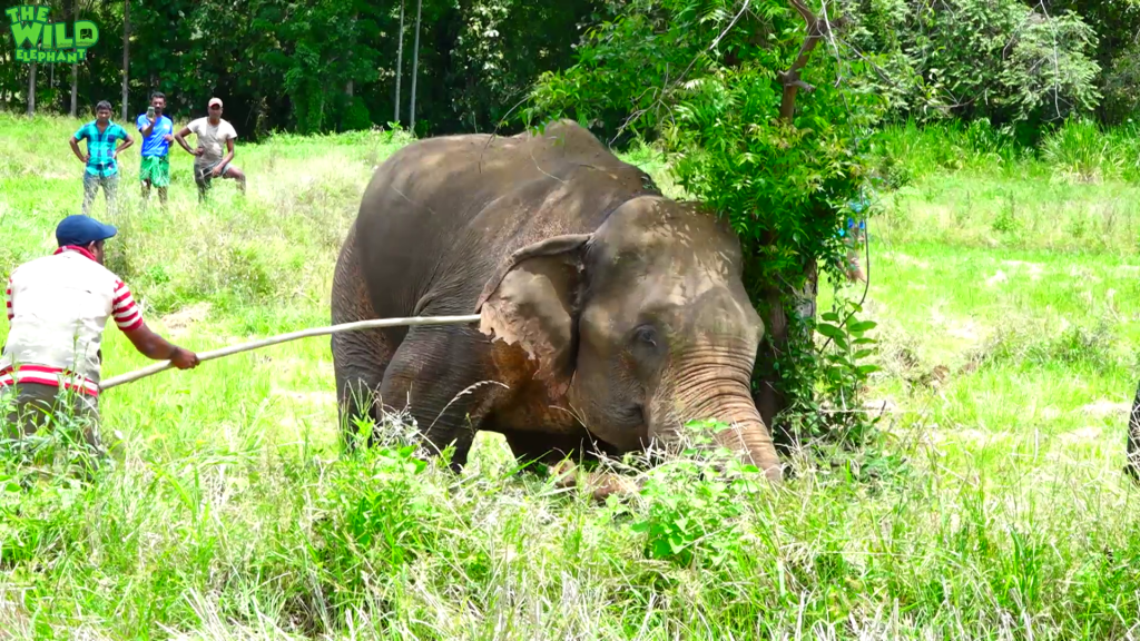 A giant elephant gets a pass to a safer jungle part 2