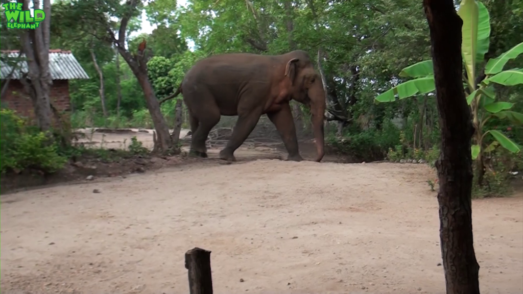 A Monster Elephant Invades a Village