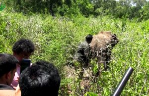 Adventures of a wildlife officer, Treating elephants