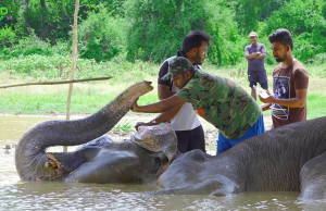 Biggest elephant rescue operation 2018. Part1 (Elephant shot in the leg)
