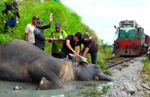 Reasons to trust Humanity! Helping an injured Elephant