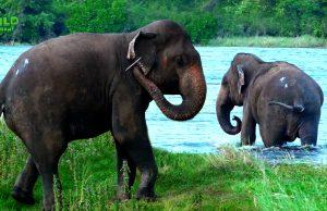 Jumbo sized elephant treated by wildlife officers