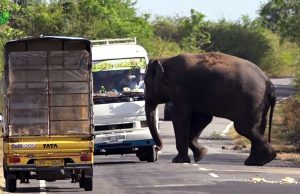 Visiting a Tollbooth Giant Elephant Waiting for Food