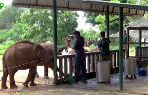 Feeding Milk to Cute Baby Elephants