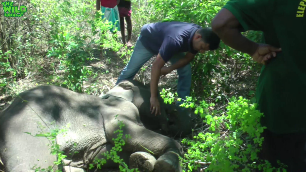 """Saving a Young Elephant from """"Hakka Patas"""": Humans are kind"""
