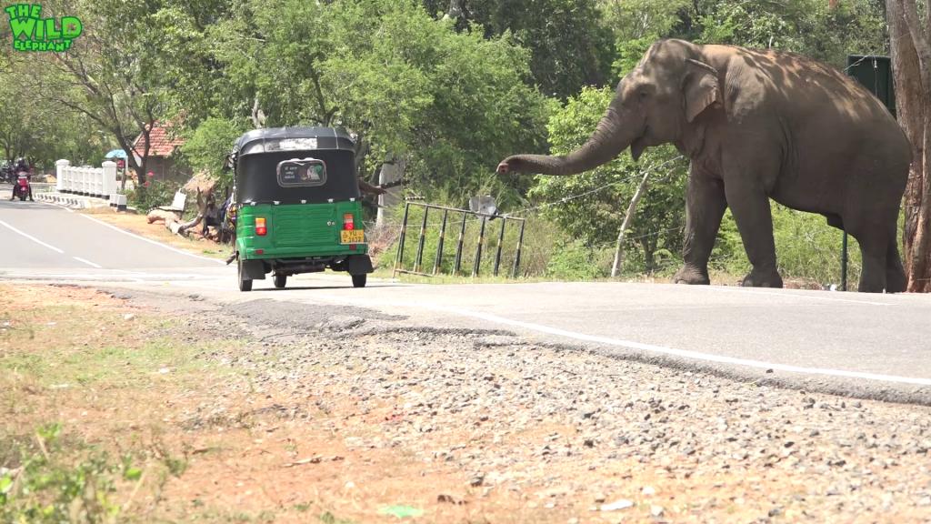 Behemoth of an elephant waits by the village demanding food